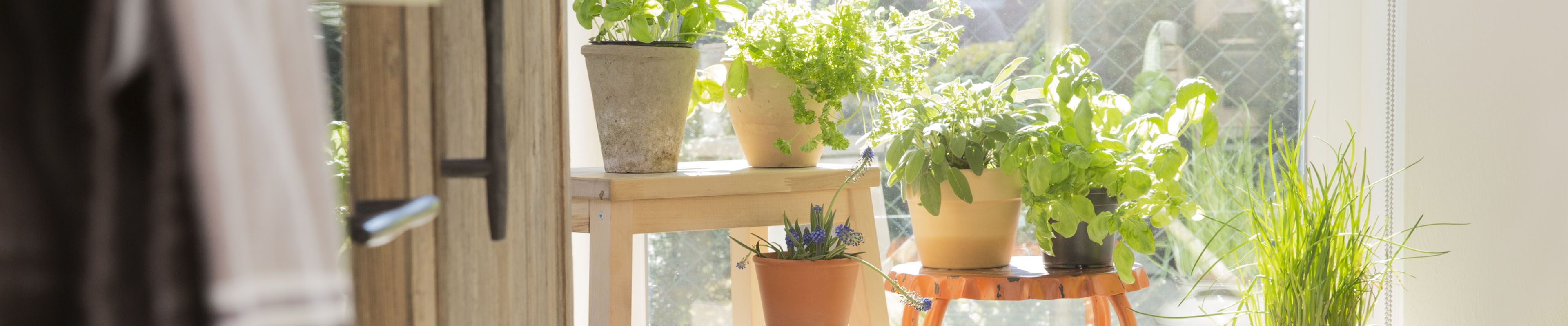 8 houseplants that improve air quality american family insurance - Plants can improve ambience home ...