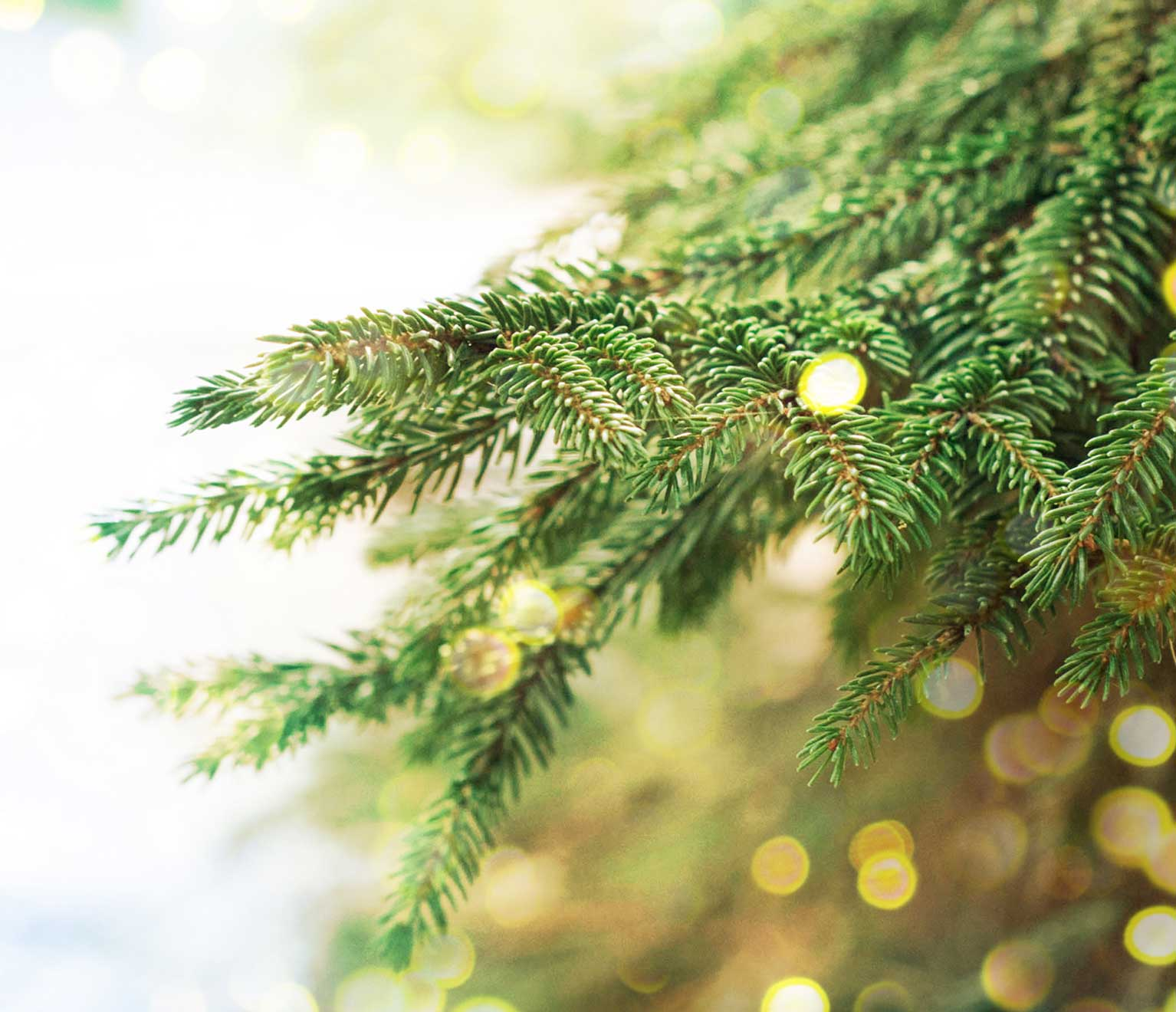 Disposing Of Christmas Trees: American Family Insurance